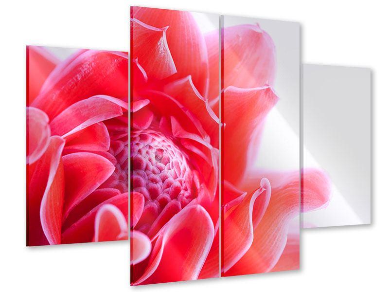 Acrylglasbild 4-teilig Etlingera XXL