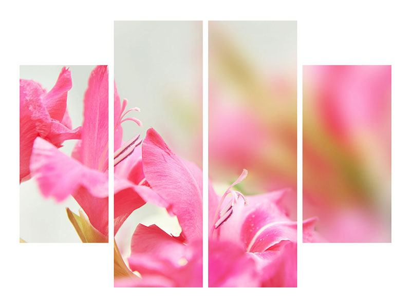 Acrylglasbild 4-teilig Gladiolen