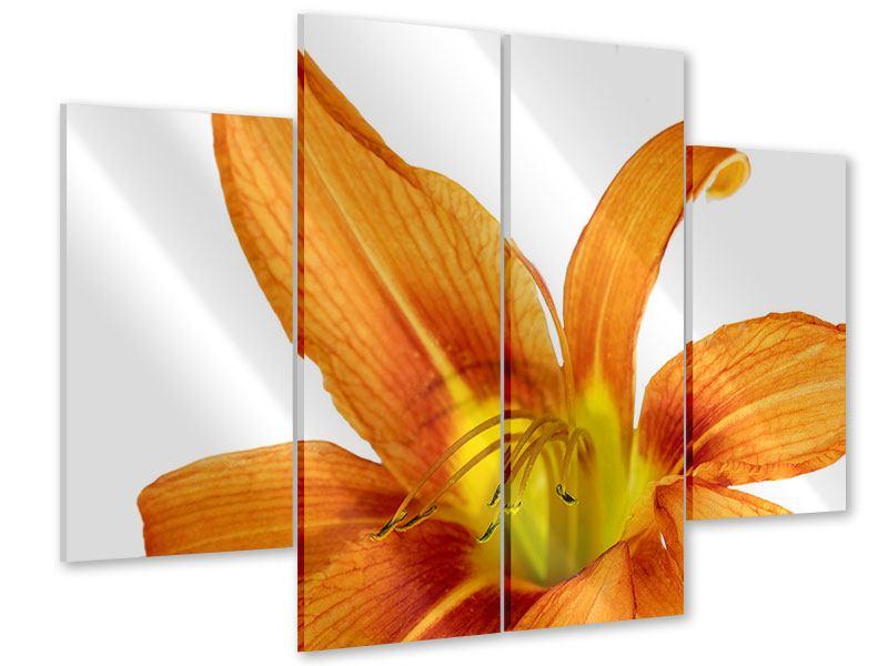 Acrylglasbild 4-teilig Die Tiger-Lilie