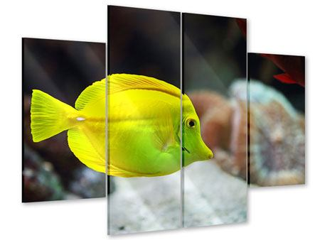 Acrylglasbild 4-teilig Segelflossendoktorfisch