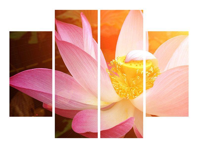 Acrylglasbild 4-teilig Close Up Lotus