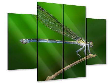 Acrylglasbild 4-teilig Die Libelle