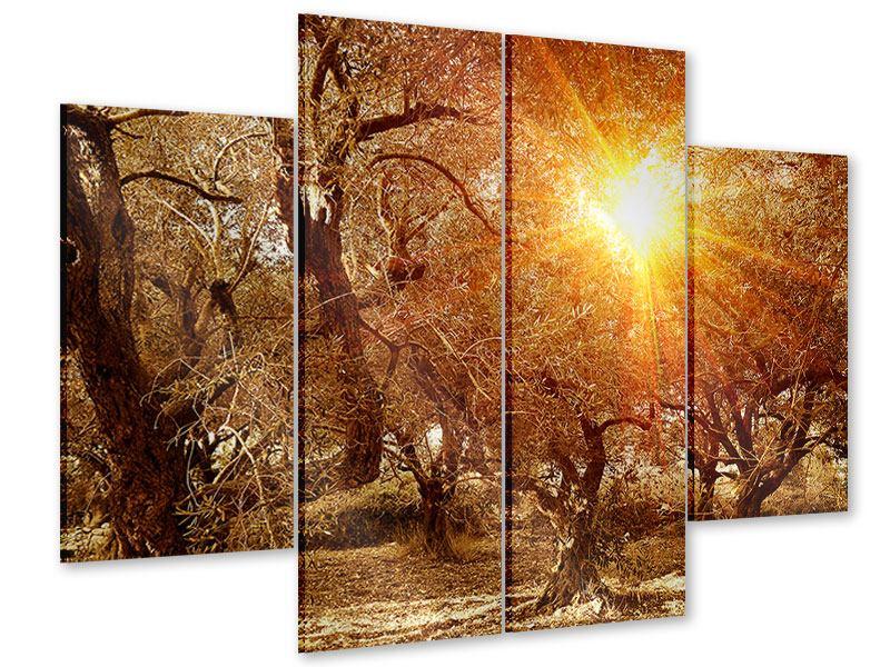 Acrylglasbild 4-teilig Olivenbäume im Herbstlicht