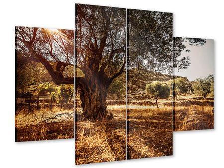 Acrylglasbild 4-teilig Olivenhain