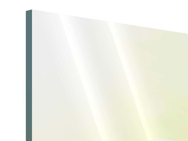 Acrylglasbild 4-teilig Lilien-Perspektive