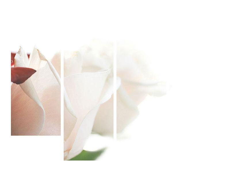 Acrylglasbild 4-teilig Herrliche Rosen