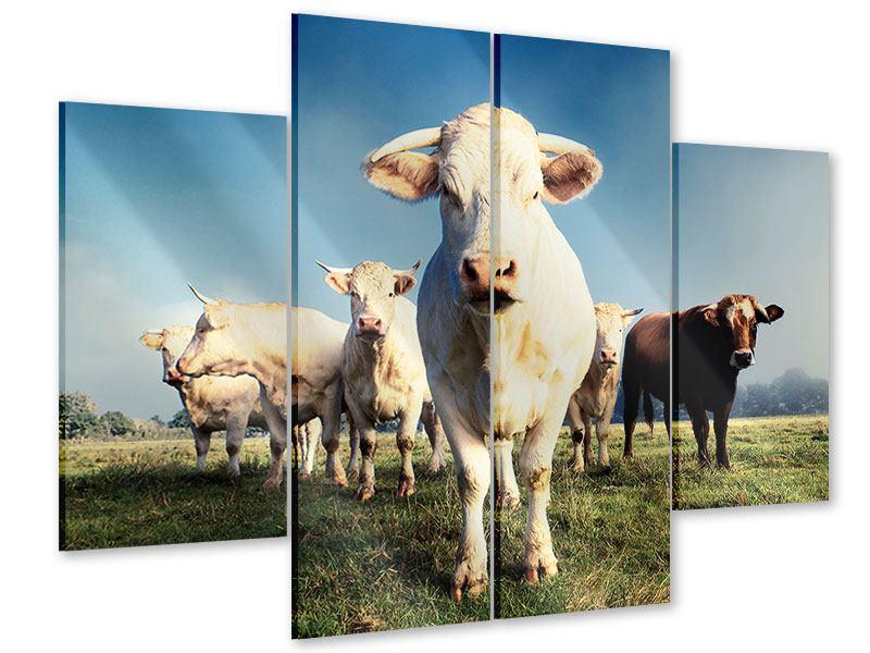 Acrylglasbild 4-teilig Kühe