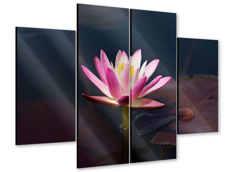 Acrylglasbild 4-teilig Seerose in der Abenddämmerung