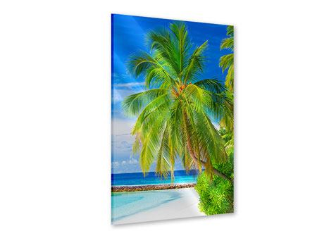Acrylglasbild Die Palme