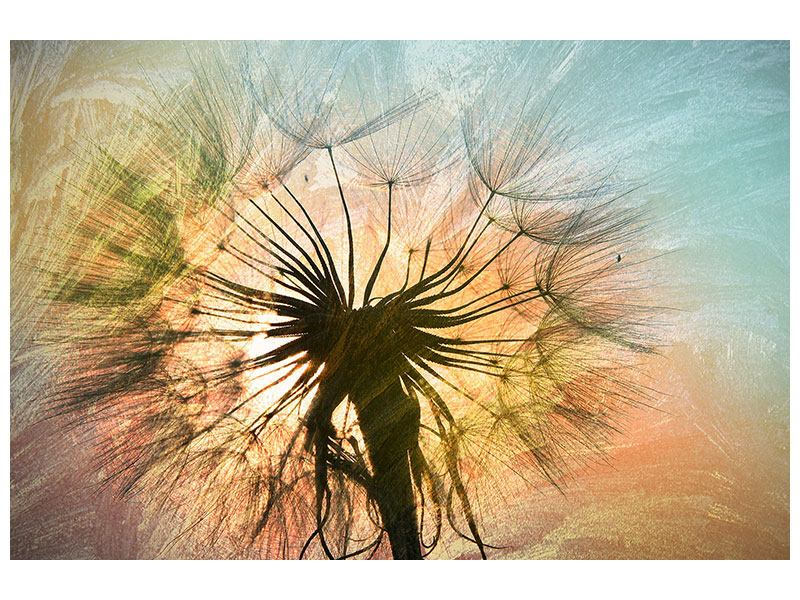Acrylglasbild XXL Pusteblume