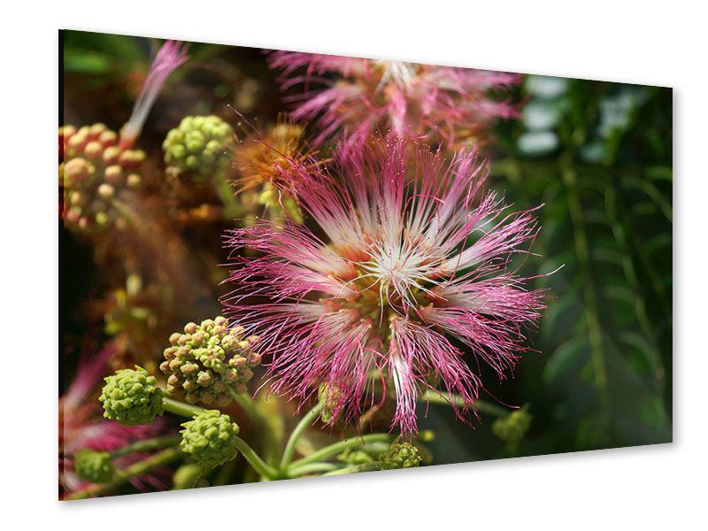 Acrylglasbild Die Regenbaumblüte