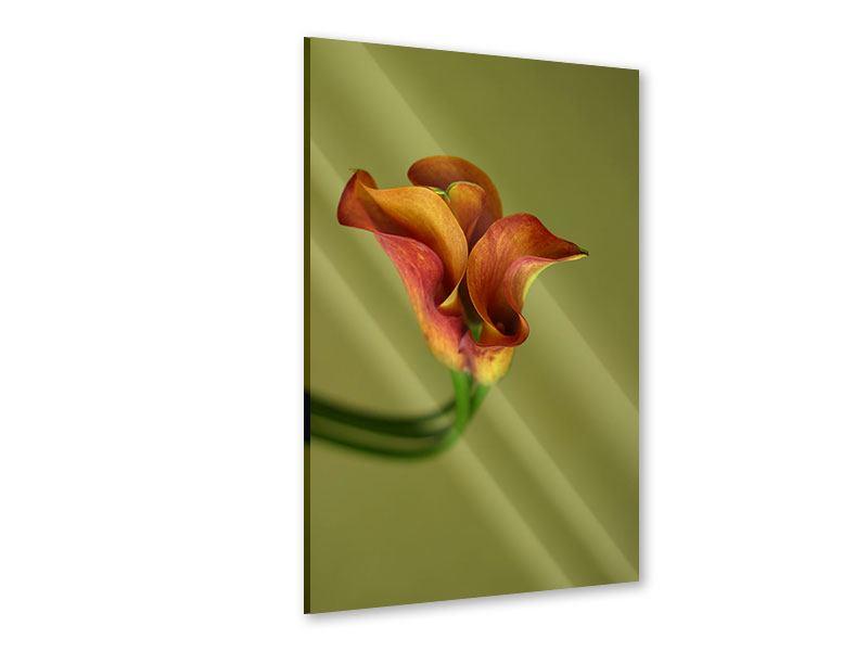 Acrylglasbild Edle Calla
