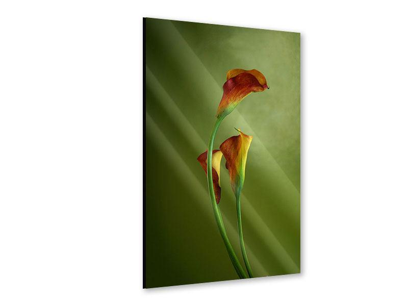 Acrylglasbild 3 Callas