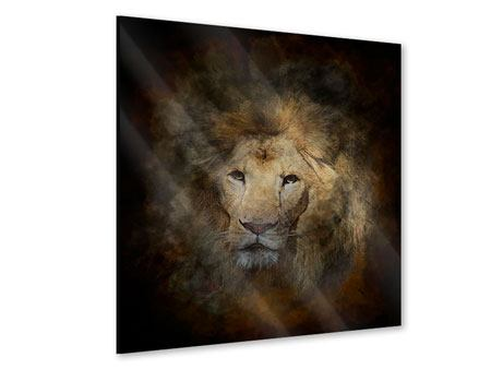 Acrylglasbild Löwenportrait