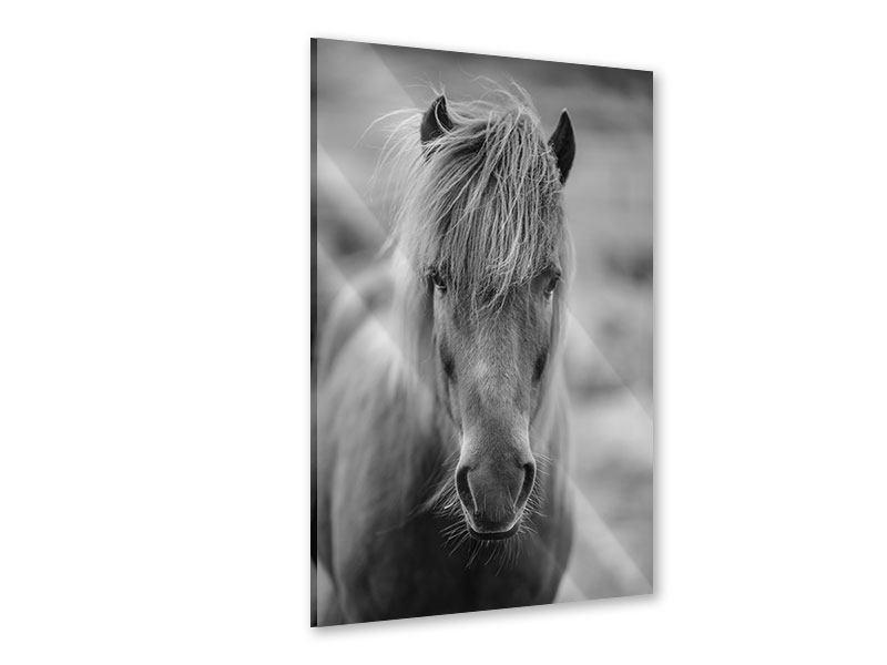 Acrylglasbild Da Steht Ein Pferd Auf`m Flur