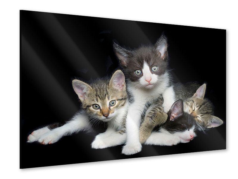 Acrylglasbild Katzenquartett