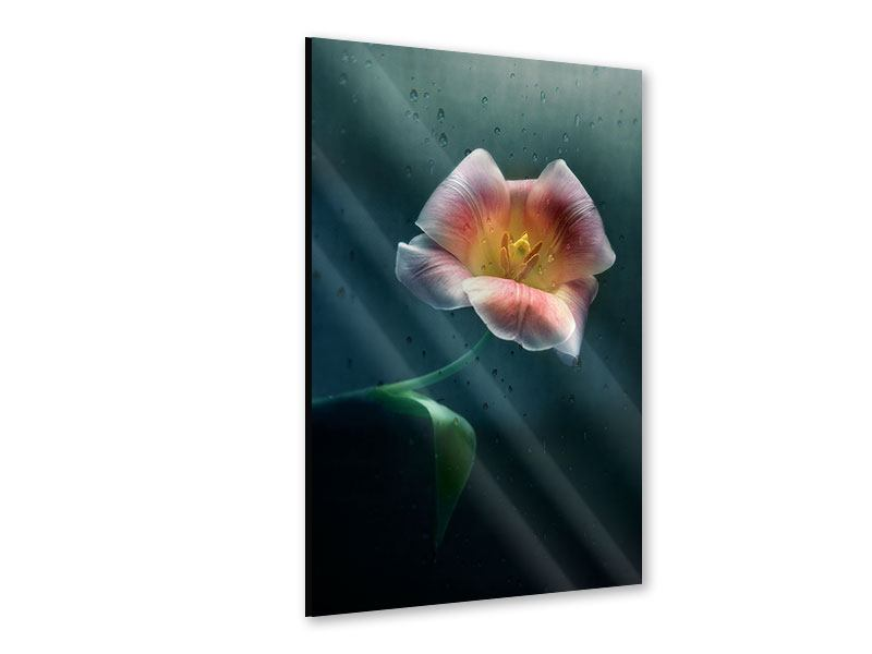 Acrylglasbild Die geöffnete Tulpe