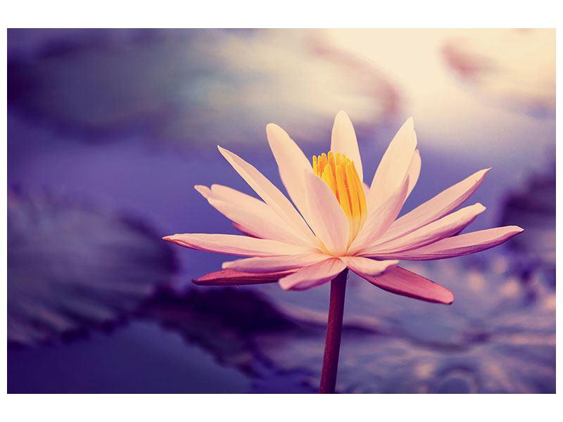 Acrylglasbild Lotus bei Sonnenuntergang