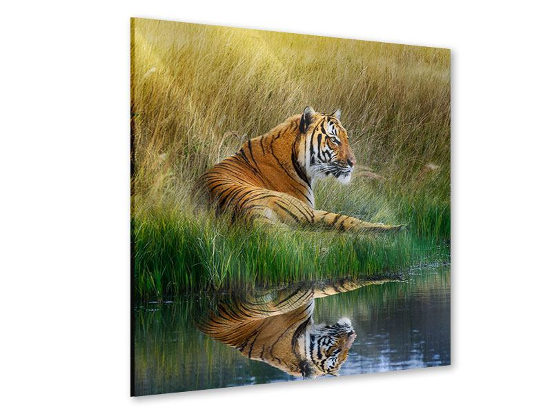 Acrylglasbild Der Tiger