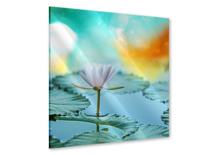 Acrylglasbild Verträumte Lotus