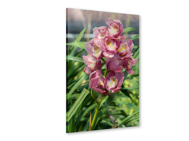 Acrylglasbild Wilde Orchideen