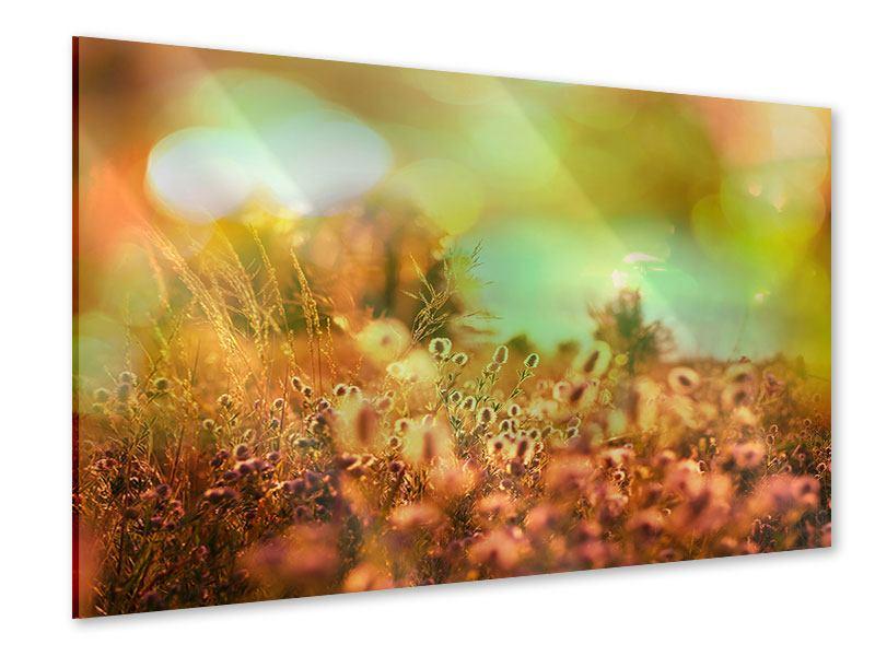Acrylglasbild Blumenwiese in der Abenddämmerung