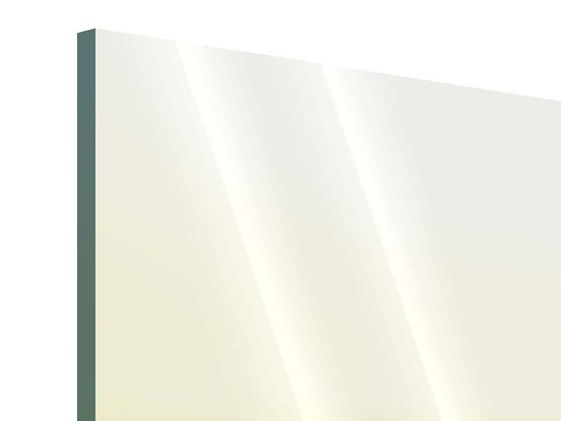 Acrylglasbild Haifischflosse