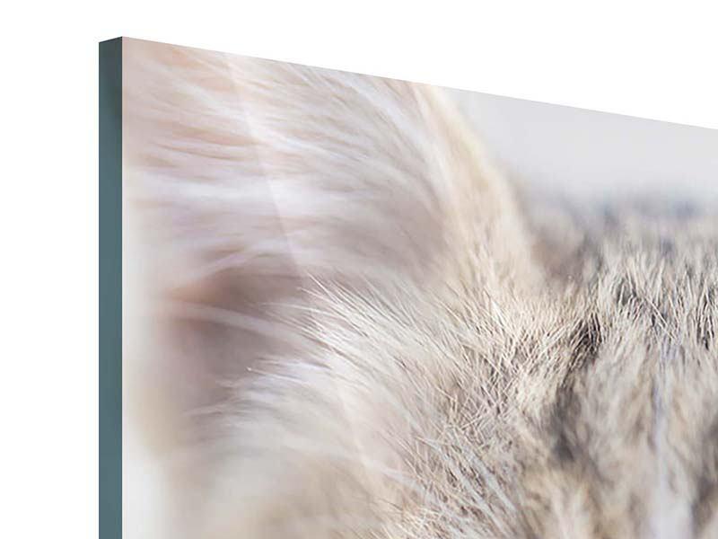 Acrylglasbild Katzenkind