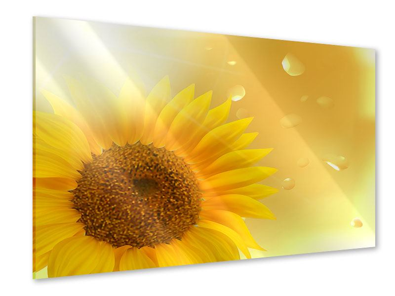 Acrylglasbild Sonnenblume im Morgentau