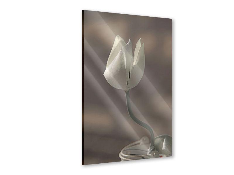 Acrylglasbild Die Tulpe in Sepia