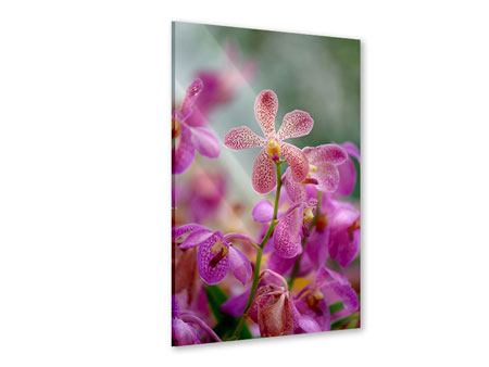 Acrylglasbild Orchidee Pünktchen