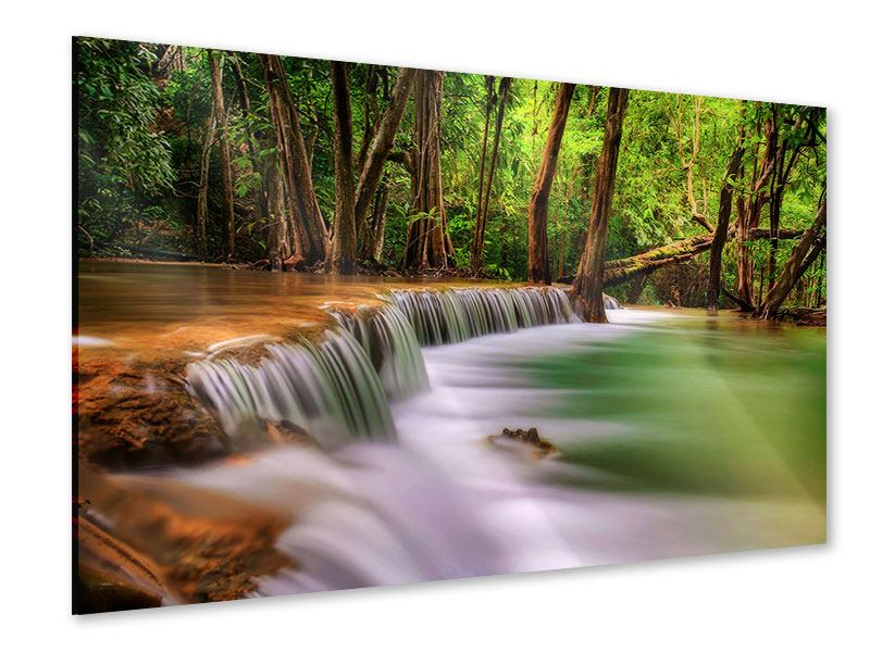 Acrylglasbild Deep Forest
