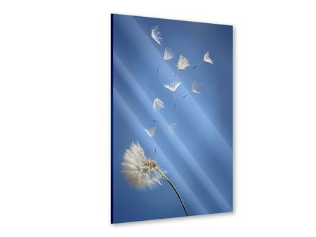 Acrylglasbild Pusteblume XL
