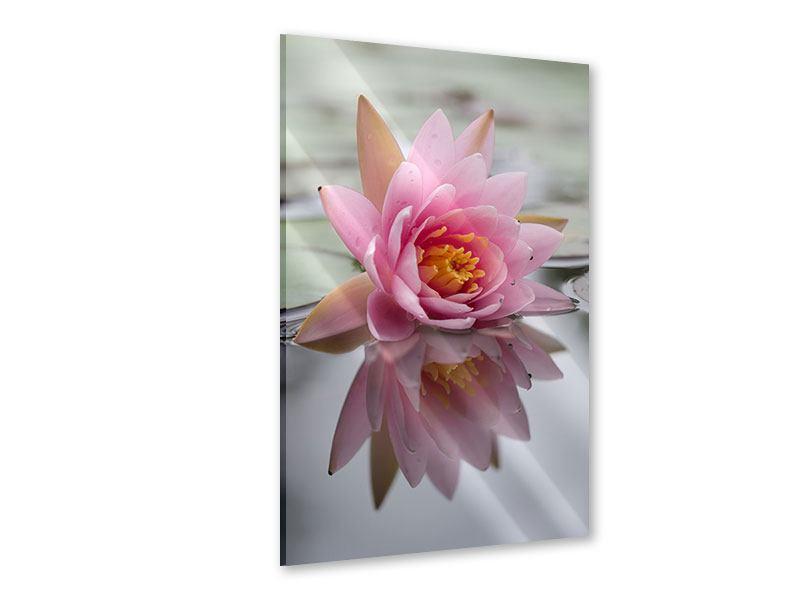 Acrylglasbild Lotus
