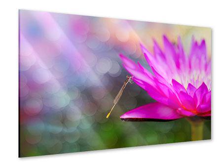 Acrylglasbild Besuch bei der Seerose
