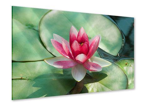 Acrylglasbild Der Frosch und das Lotusblatt