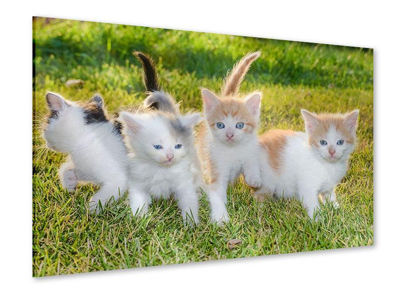 Acrylglasbild Katzenbabys