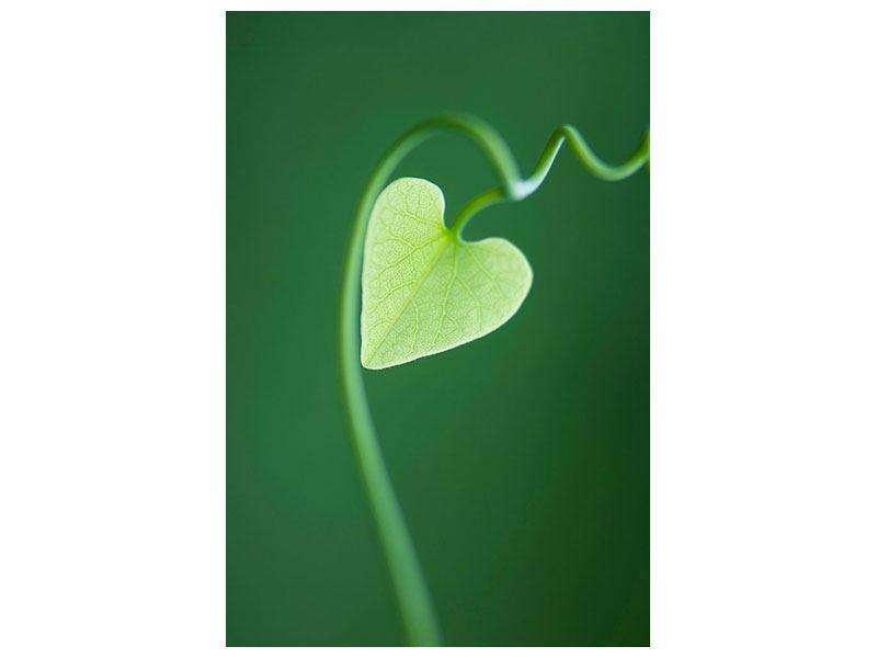 Acrylglasbild Herzblatt
