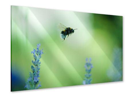 Acrylglasbild Die Biene