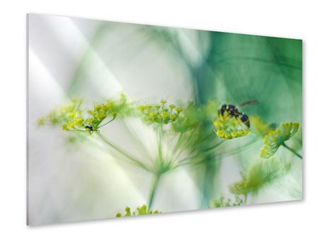 Acrylglasbild XXL Pastinak