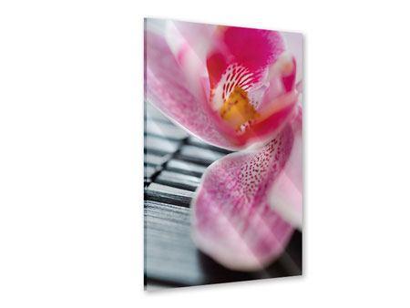 Acrylglasbild Close up Orchidee