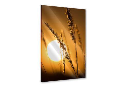 Acrylglasbild Romantischer Sonnenuntergang