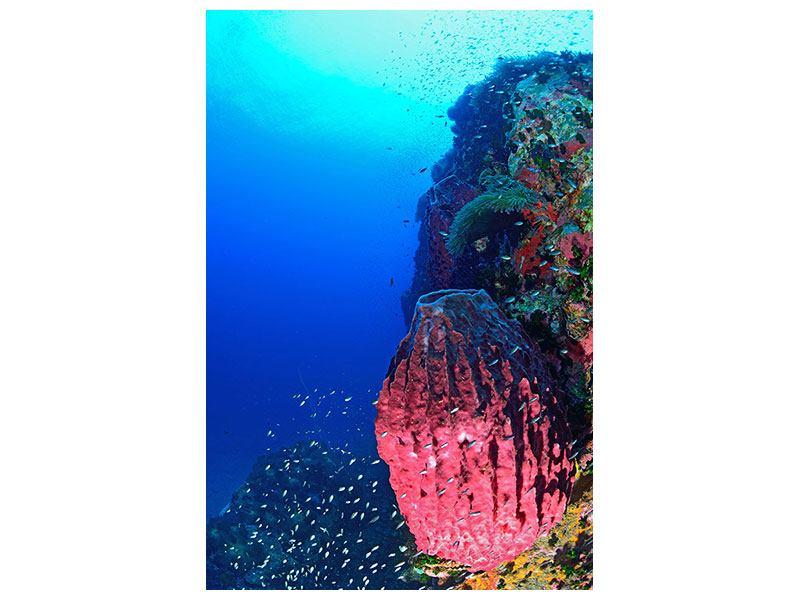 Acrylglasbild Unterwasserwelt