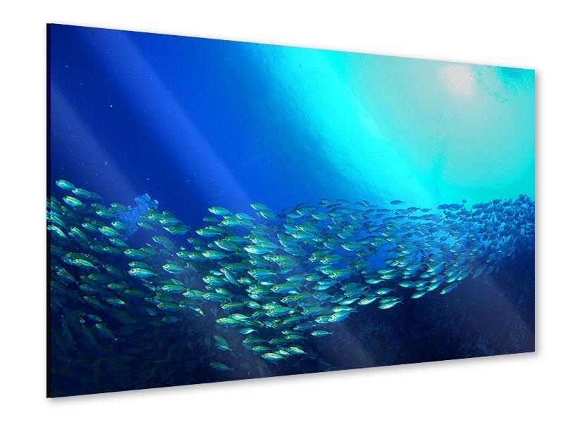 Acrylglasbild Fischschwarm