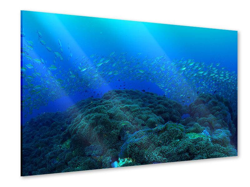 Acrylglasbild Fischschwärme