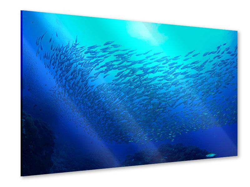 Acrylglasbild Fischwelt