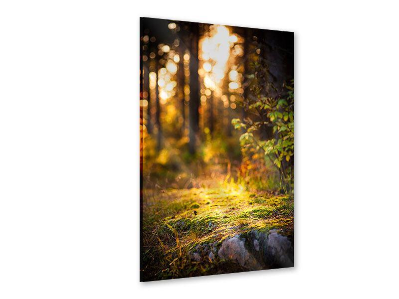 Acrylglasbild Der Wald im Hintergrund