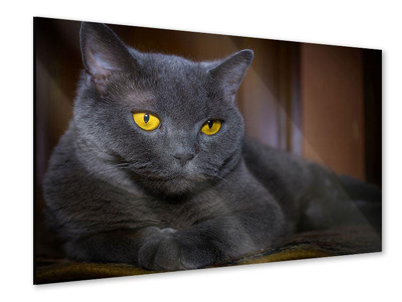 Acrylglasbild Katzengöttin