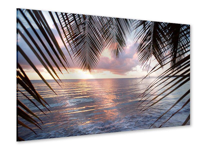 Acrylglasbild Unter Palmenblätter