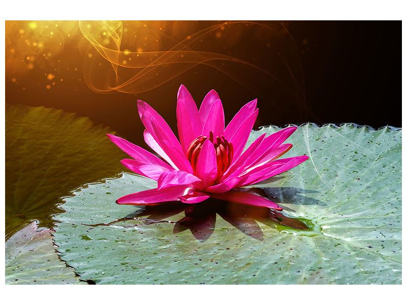 Acrylglasbild Der Frosch und das Seerosenblatt